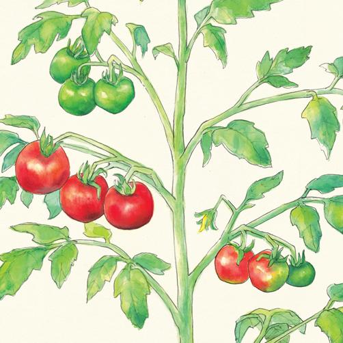 General Organics Art Poster